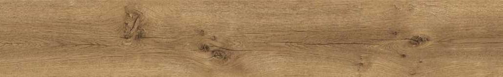 3005_Nature Oak